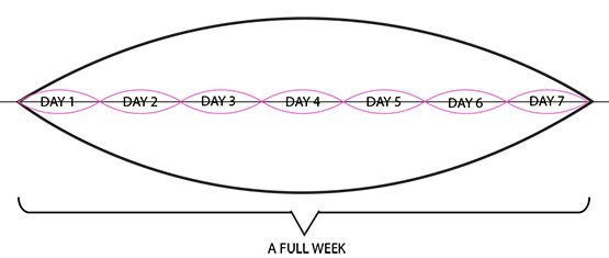 week cycle