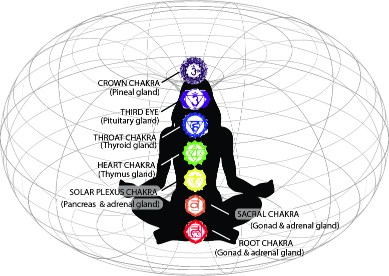 201 moreover Chakras The Physical Energy Centers likewise Circulatory System further Final Int Scm2u4l3 The Humancirculatorysystem furthermore Male Human Reproductive System Male Human Reproductive System Human Body Diagram. on circulatory system body parts