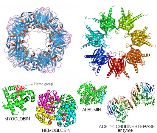 proteins structures